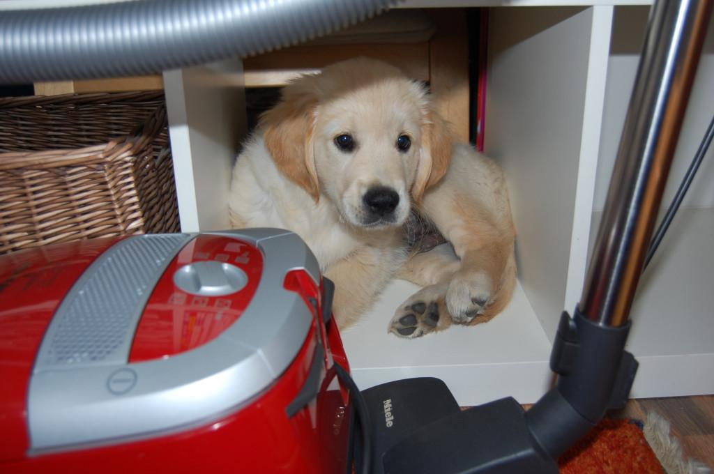 Hier gibt es sooo viel zu entdecken... Man kann durch Bücherregale klettern...