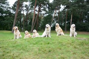 Von links nach rechts: Leo, Lisbeth, Lana, Lando, Luca und Lorbas beim Wurftreffen im September 2013