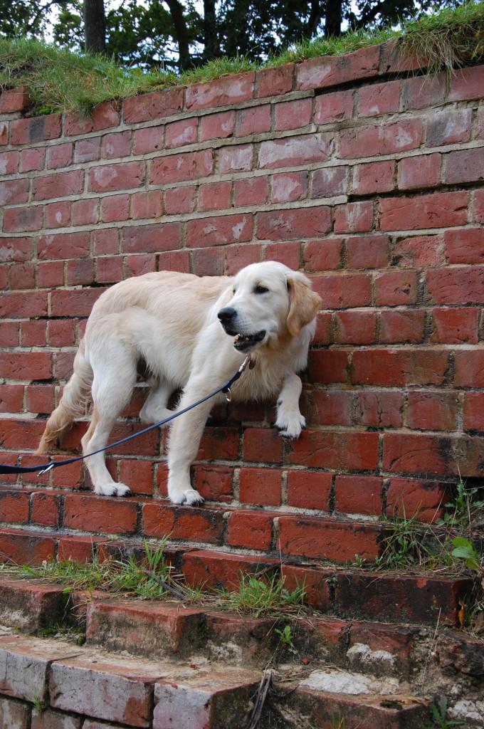 Hat Leo Bergziegen-Gene abbekommen? Er klettert für sein Leben gern!
