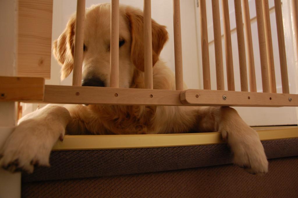 Das Treppengitter im Haus missfällt ihm deshalb sehr...