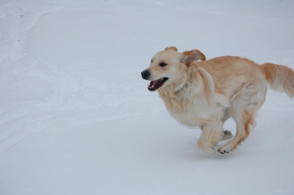 Aber den Schnee liebte er sofort!