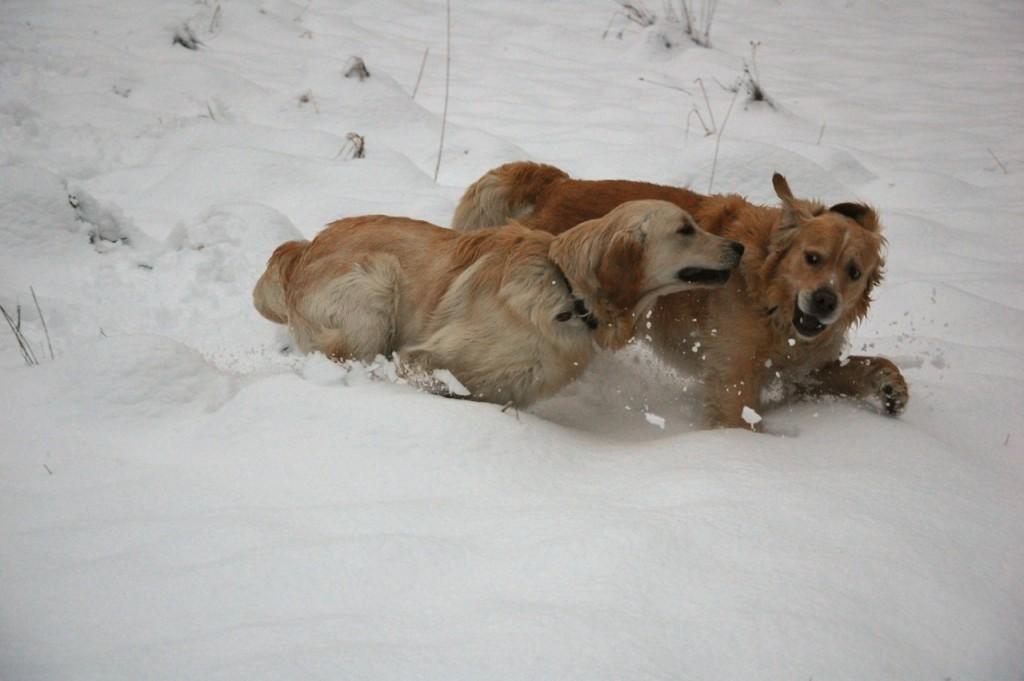 Leo (links) mit seinem Golden Retriever Kumpel Max