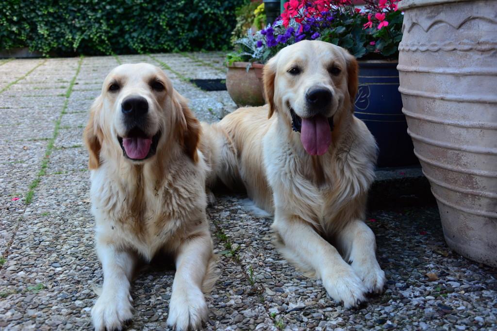Leo (rechts) und seine Schwester Lisbeth