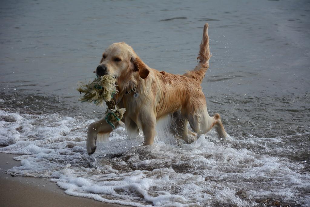 ... dem Strandgut, ...