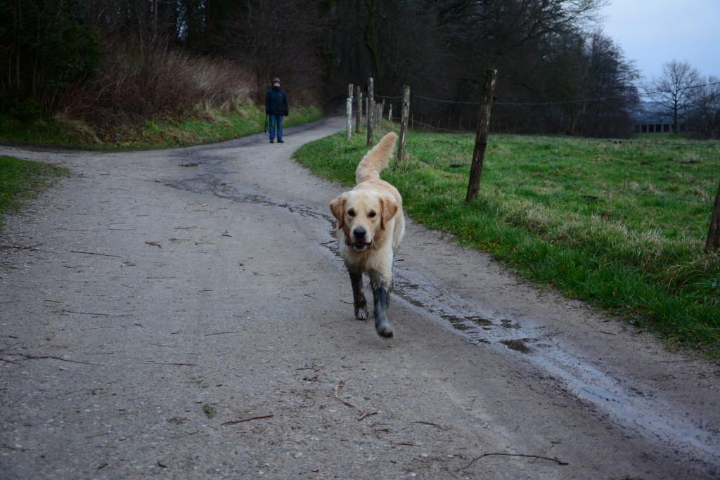 Aber auch zu Hause gibt es lustige Spaziergänge ganz nach Leos Geschmack!