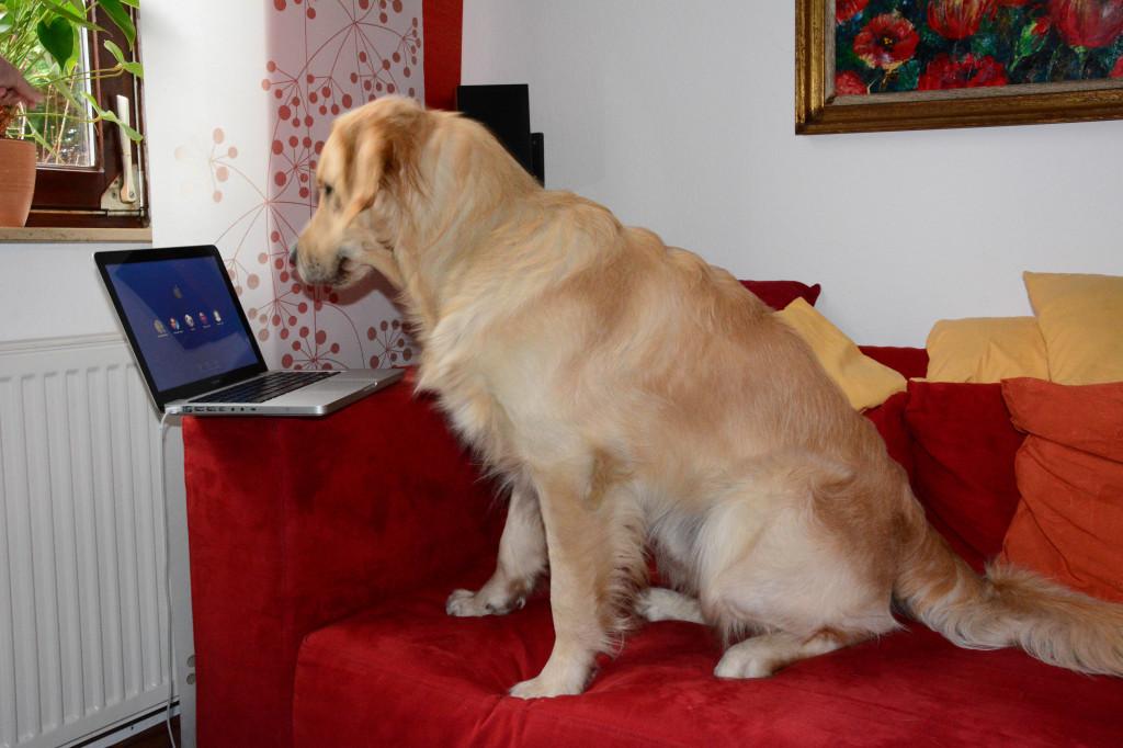 Extrem schlauer Hund, wahrscheinlich googelt er sich selbst...