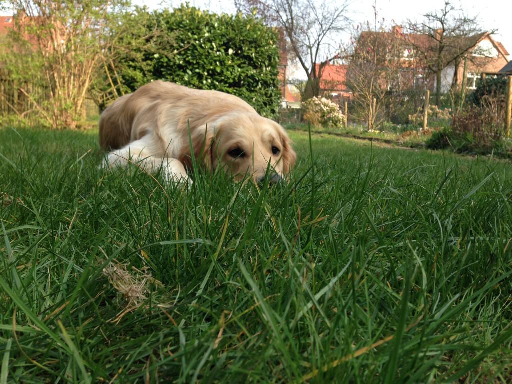 Der Frühling ist da! Im Garten kann Leo relaxen...