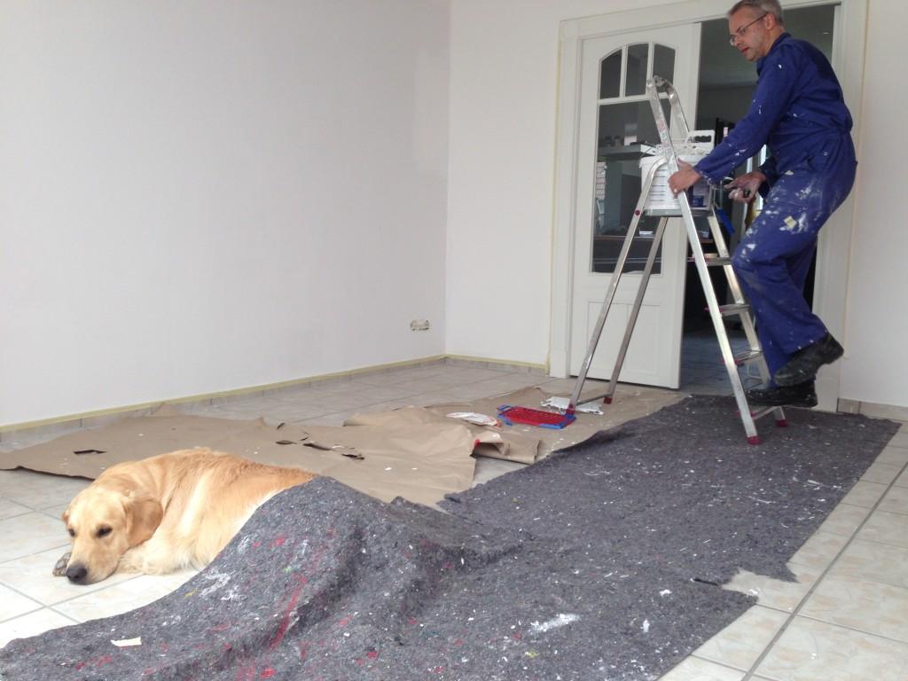 Wie üblich ist Leo durch nichts aus der Ruhr zu bringen - auch durch so einen komischen Teppich beim Renovieren nicht...