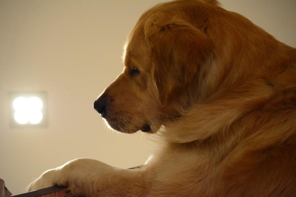 Wieder sauber liegt er am Treppenabsatz und beobachtet das Geschehen.