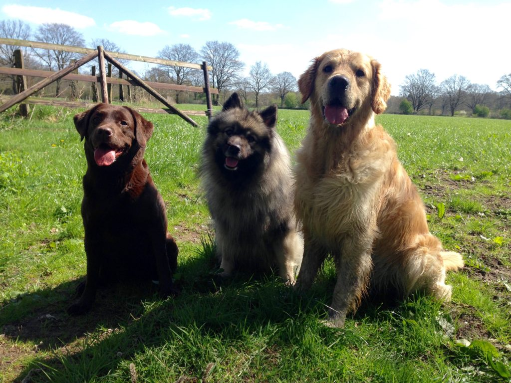 Leo trifft zum ersten Mal gemeinsam seine beiden besten Freundinnen Merle und Fifla!